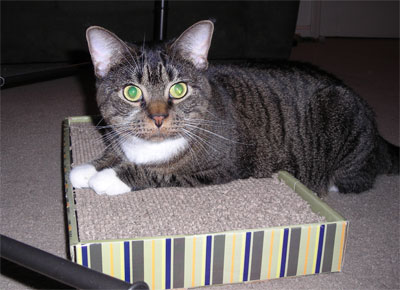 Her scratchy box