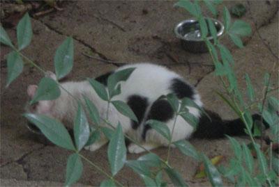 Stray cat having lunch